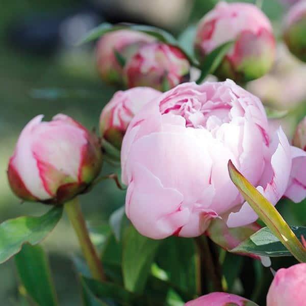 GardenLife Impressionen Blüte